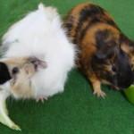 Gertrude et Germaine